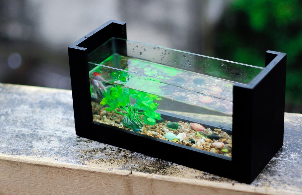 Fish aquarium in bhopal - Fresh 980406_1280