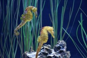 hippocampus-1229099_1280