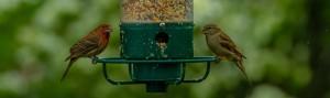 birds-3414240_1280